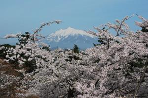 Hirosaki_2012_sakura_057