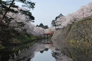 Hirosaki_2012_sakura_073